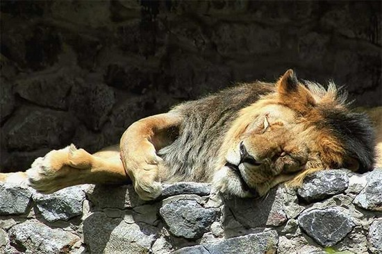 25 Funny Pictures of Sleeping Animals
