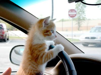 cat-driving-car.jpg