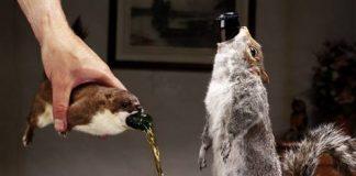 Er, make mine a double squirrel please
