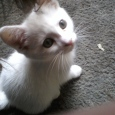 This is my cat, Speeze, when she was but a kitten.