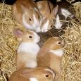 'Baby Bunny Rabbits Keeping Warm' by Martin Pettitt.