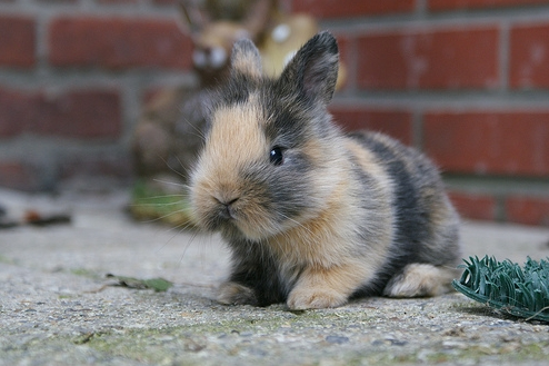10 Of The Cutest Bunny Pictures Ever