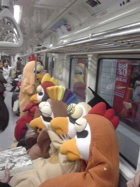 Chickens on a train