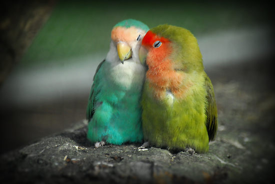 Are Animals Romantic?