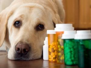 dog vitamin