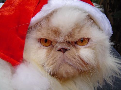 15 Santa Claus cats | Kitty Bloger