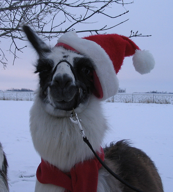 21 Cute Animals in Christmas Costumes Pictures