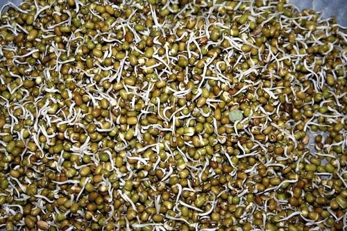 navadarshanam-workshop-pulses-beans-food