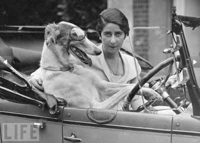 Animals Driving Cars LIFE