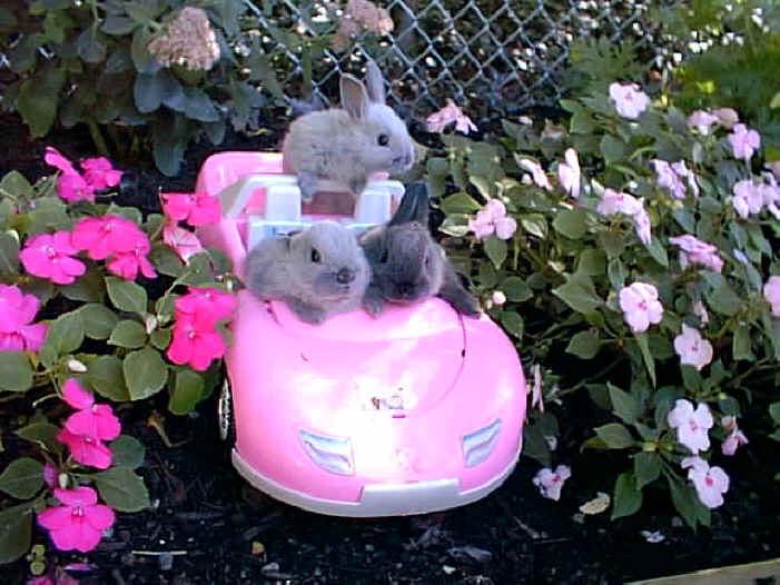 Cute Animals Driving Cars