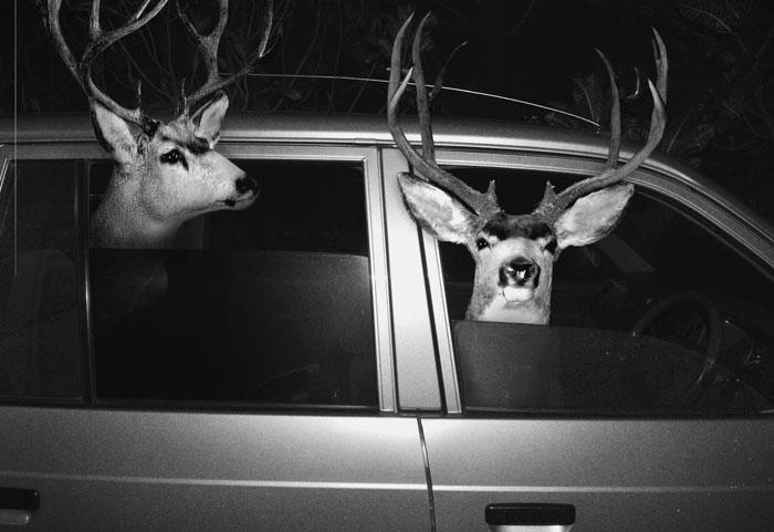 deer_in_car