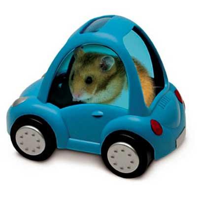 rat driving