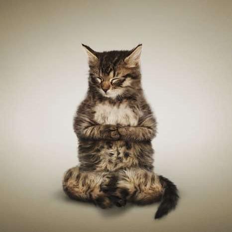 Funny Animal Yoga