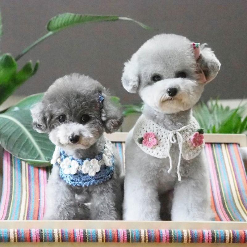 poodle-haircuts